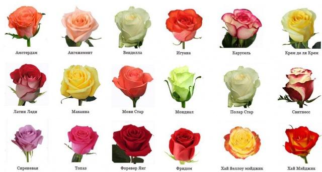 Виды цветов и сорта